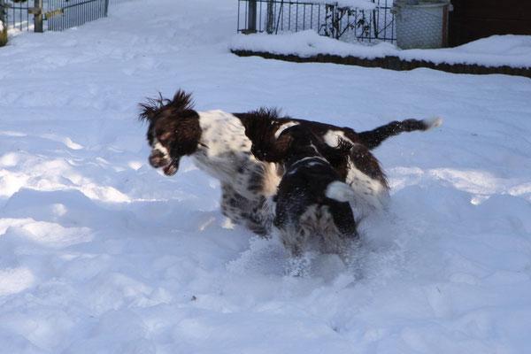 Hoppla konnte Mama Charmin zu einer Schneejagd überreden