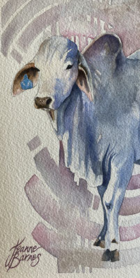 Young brahman 22x11cm watercolour on paper $350. Requires framing