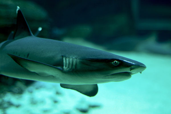 Haihaut