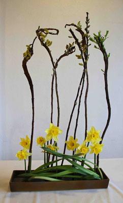Die Natur im April mit Weiden und Narzissen