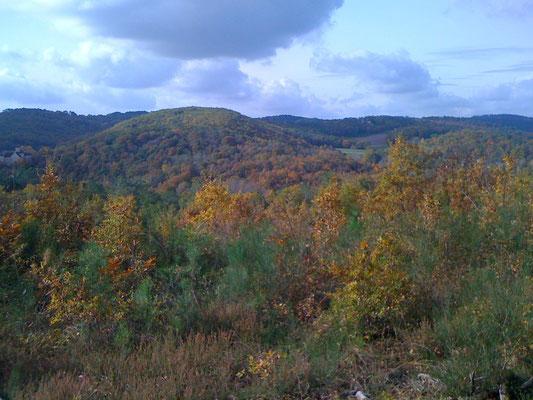 Wolken en bossen in vele kleuren