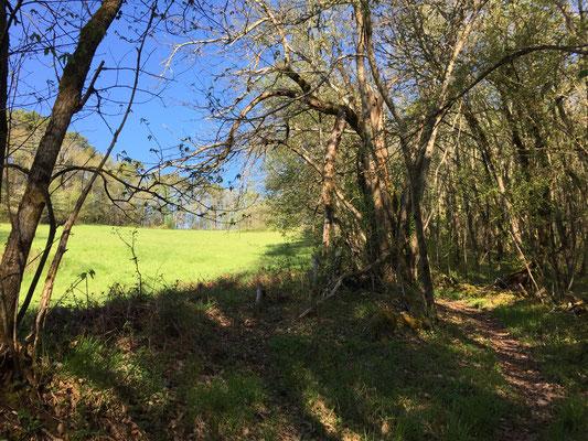 Het wordt steeds groener in de bossen