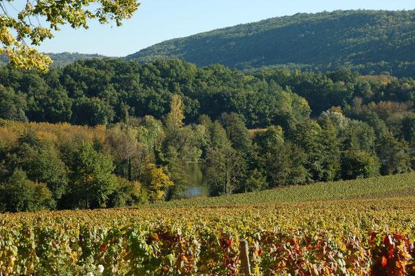 Wijngaarden op de oevers van de Lot