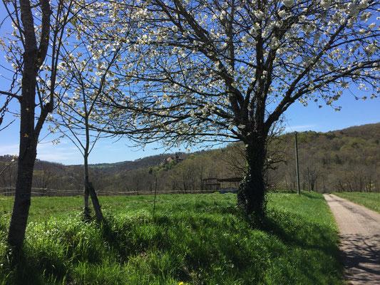 Heerlijke wandelingen maken in de lentezon