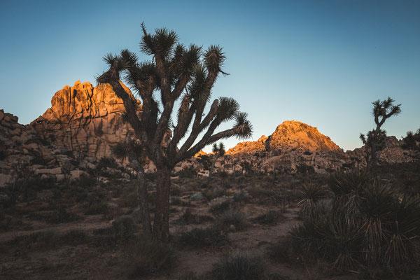 Joshua Tree California USA