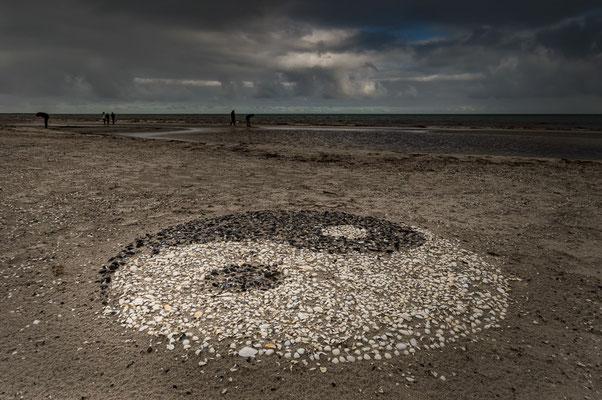 Ein Bild aus Muscheln am Strand