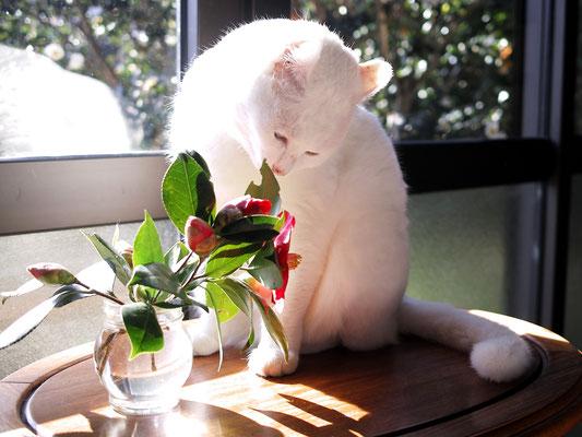 生け花でもやろうかな