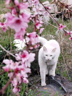 梅の花かな?