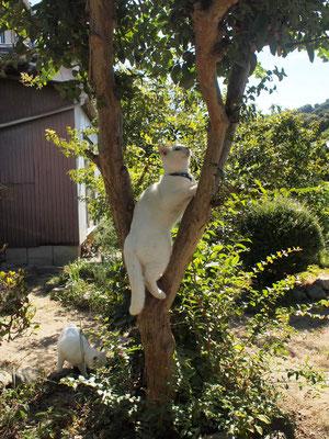 木に登るぞ