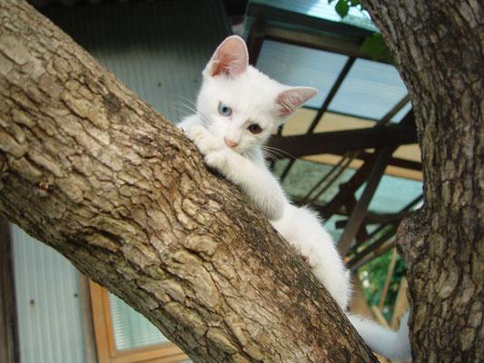木登り ももちゃん