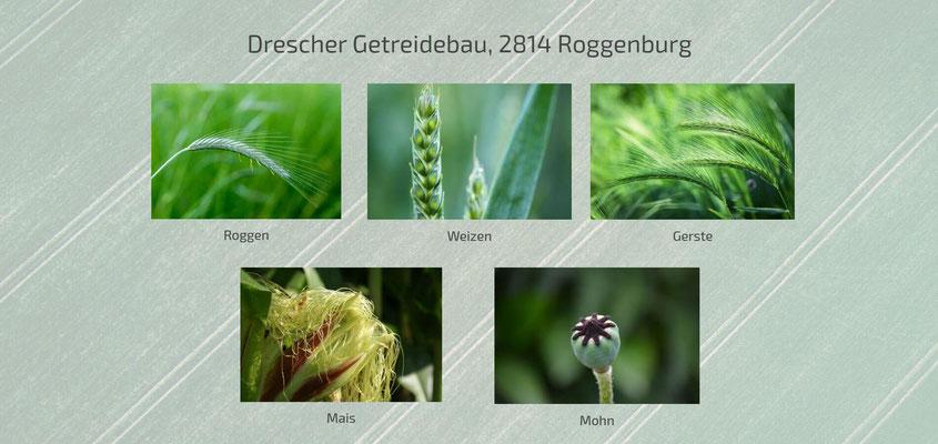 Moderne Internetseiten - Landwirtschaft_Getreidebau