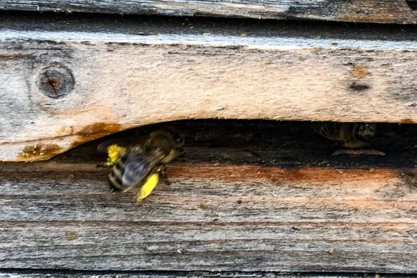 ferienwohnung-chiemsee-bienen