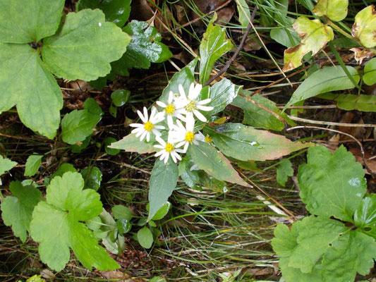 小さな野菊の花が心和ませます。