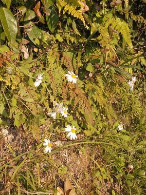 参道にも小さな花々が咲いています。