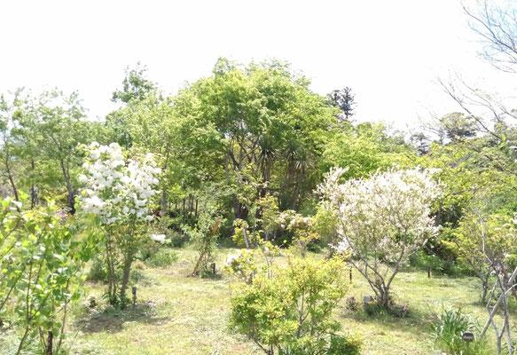 様々な白い花が新緑に映えて爽やかです。