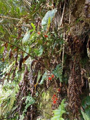 樹木葬地の脇に自生する野イチゴの実