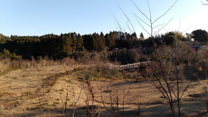 裏山から望む樹木葬地