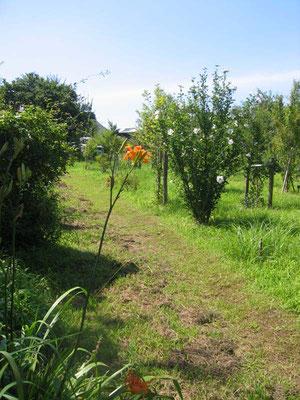 ノカンゾウの花咲く樹木葬地
