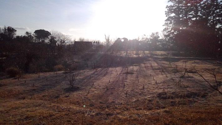 朝日差す樹木葬地