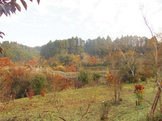 第二樹木葬地から第三に続く橋を臨む。