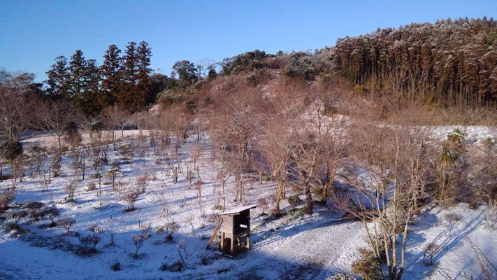 雪の樹木葬地