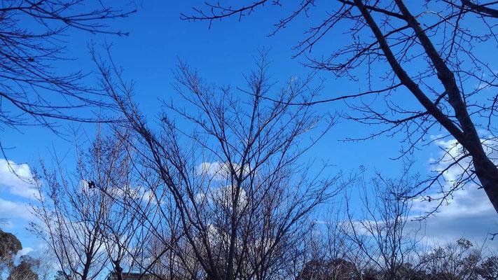 冬晴れの樹木葬地