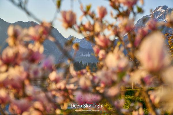 Schloß Neuschwanstein umrahmt mit Blume