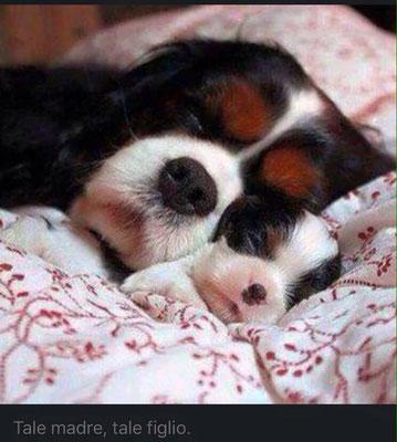Viola & puppy ♡ - pr. G.V.