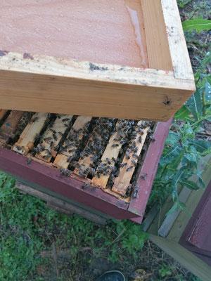 Les nourrisseurs en bois couvre-cadres sont posés sur le dessus des ruches