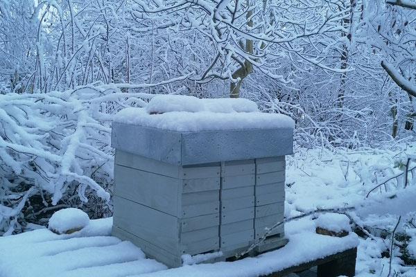 Rassemblées par trois, ce sont des colonies qui passent l'hiver sans souci