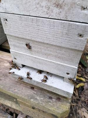 Création de ruches avec chacune une reine