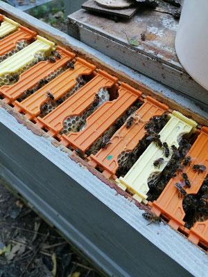 Chaque ruche sera constituée de trois fois 18 cadrons