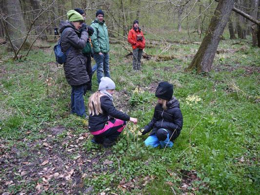 Die Kindern bewundern die Hohe Primel.: Foto: Michael Wetzel