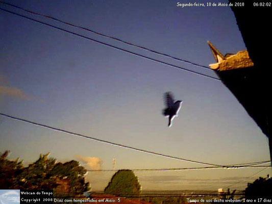 Pássaro em 10/05/2010.