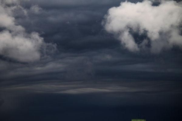 Undulatus asperatus vistas no Rio de Janeiro, Rio de Janeiro, em 28/12/2011 (foto de Serginho Bloomfield).