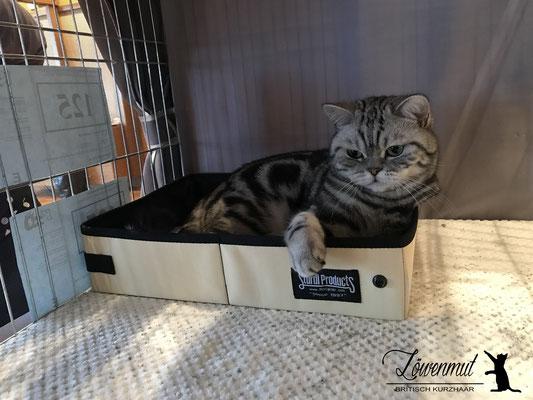 So entspannt, dass man auch mal in der Katzenkiste relaxen kann