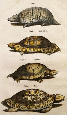 Armadillo y tortugas. Grabado calcográfico iluminado a mano de época. Jonston, J. 1657.