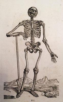 Visión frontal del esqueleto humano. Xilografía. A. Vesalio, 1543. Edición de A. Maschenbauer, 1706.