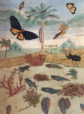 Metamorfosis en anfibios e insectos del Surinam, junto con las especies vegetales de las que se alimentan. Grabado calcográfico iluminado a mano de época. M. S. Merian, 1719