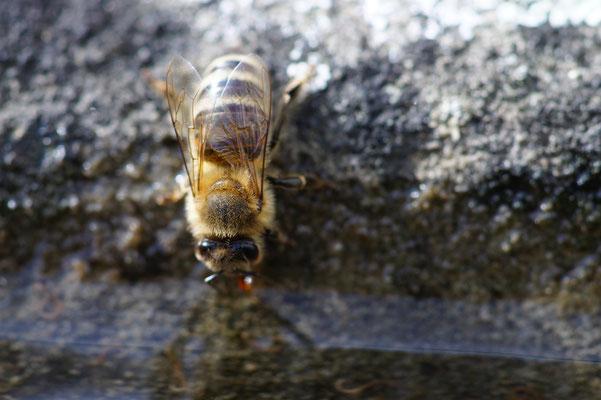 Bienen und Blühten