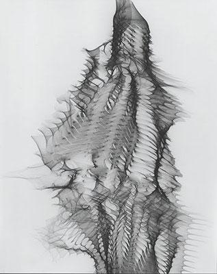 HEIN GRAVENHORST. Reflexbild, 1965. Silbergelatine-Barytpapier. Unikat. 36,1 x 28,8 cm