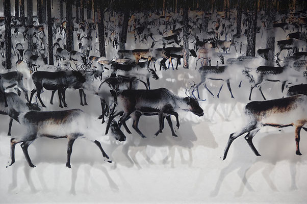 520 reindeer I, 2011. Ink prints on 2 mm flexible metacrylate.Triptych of superimposed two layered images. 100 x 470 x 8  cm