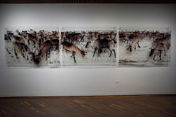 520 reindeer II, 2011. Ink prints on 2 mm flexible metacrylate. Triptych of superimposed two layered images. 100 x 470 x 8  cm