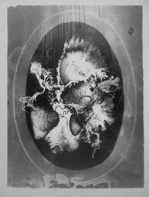 HEINZ HAJEK-HALKE. Nature Morte. Silbergelatine-Barytpapierabzug. 60,8 x 51 cm. Ed. 2/12