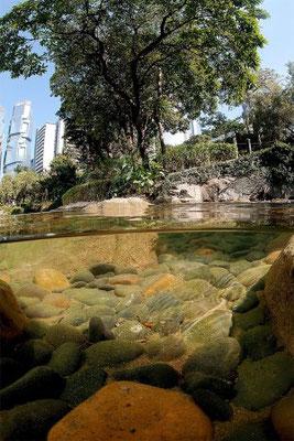 Hong Kong Island. Hong Kong Park. 2009