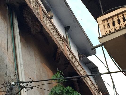 Unterwegs sehen wir an einem Haus gigantische Bienenstöcke. Überhaupt wird in der Stadt sehr viel Honig verkauft.