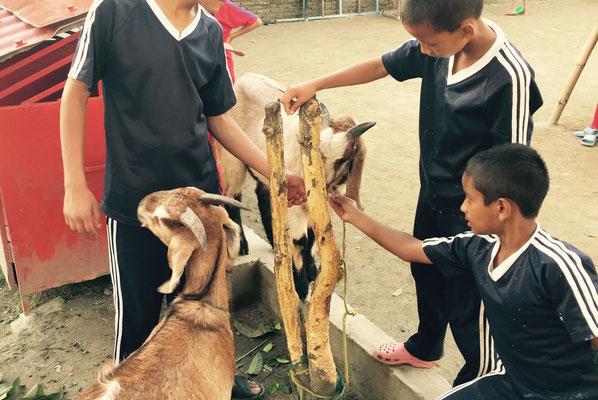 Die Kinder kümmern sich gut um die beiden, auch wenn allen klar ist, was den Tieren bevorsteht.