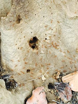 Weiter im Wald sehen wir Dutzende Termitenhügel …