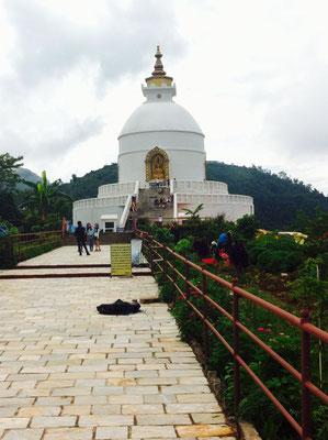 Die Friedenspakoda hoch über Pokhara