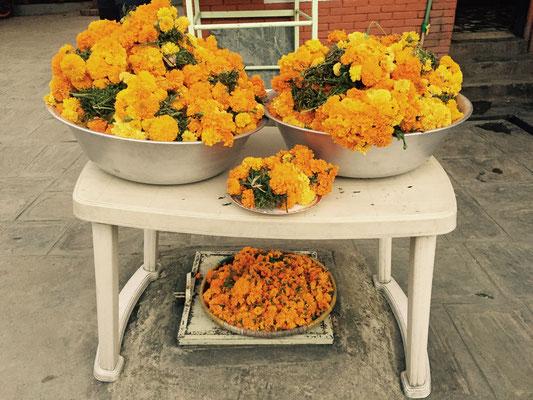Für jedes Haus werden große Kübel Ringelblumen herangebracht; auch der Echte Kugelaramant wird gern als Schmuck verwendet.